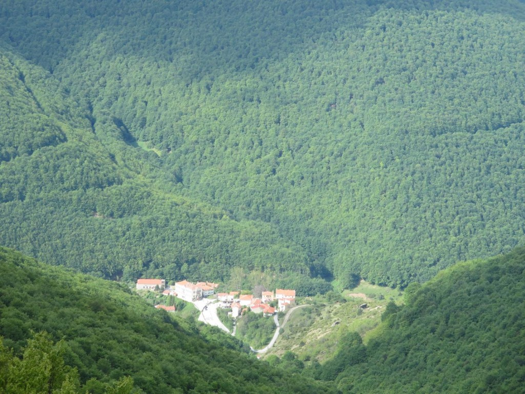 Pisoderi surrounded by forest